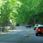 Canopy roads galore